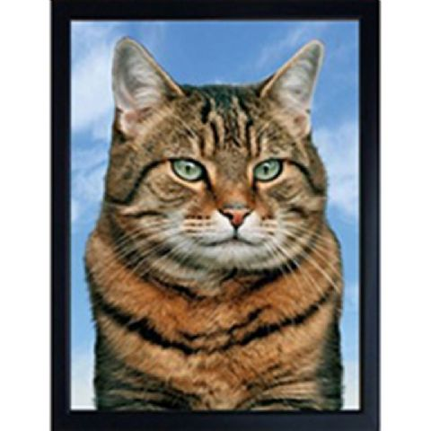 TABBY CAT 3D FRIDGE MAGNET